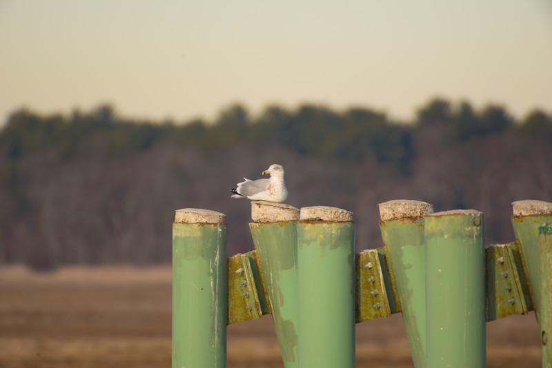19-Sept North America Birds-2646.JPG