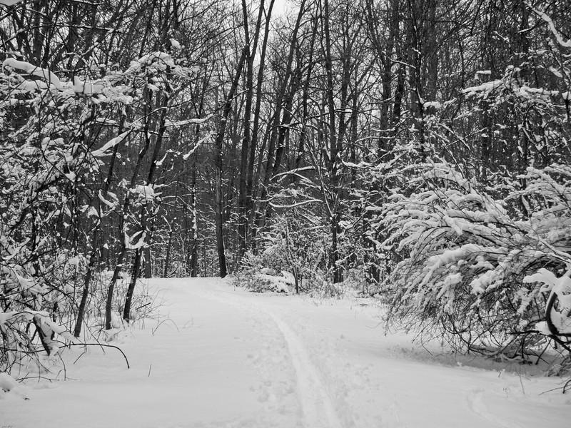 B&W Trail 022611.jpg