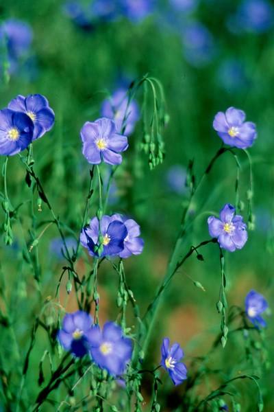amh FLOWERS (1306).jpg