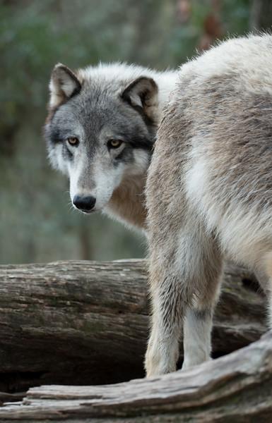 Seacrest Wolves_-73.jpg
