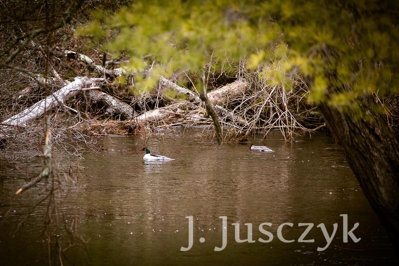 Jusczyk2021-8264.jpg