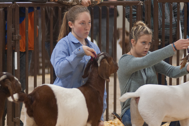 kay_county_showdown_goats_20191207-129.jpg
