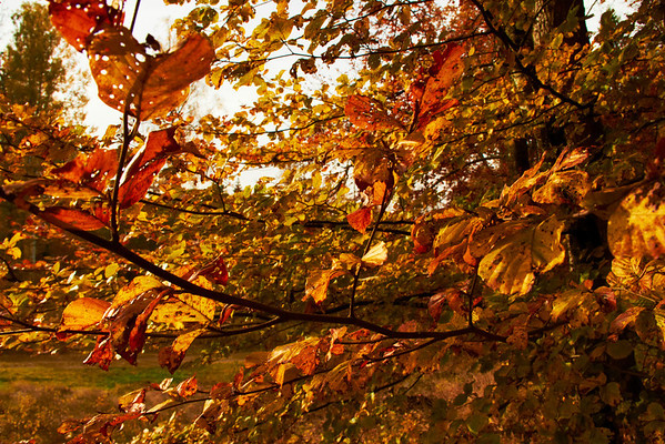 Sweden autumn