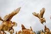 Free-range happy chickens roaming around a local small-scale organic farm
