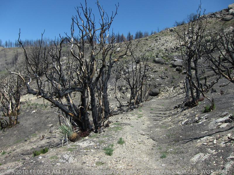 20100509035-Trail Recon, Silver Mocassin (Charlton to Shortcut).JPG