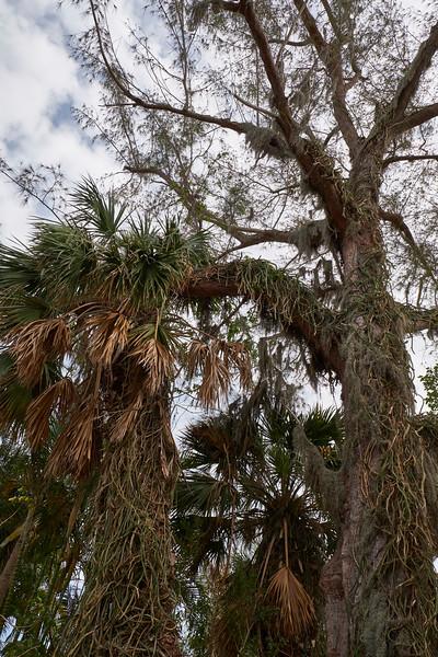 Useppa-Botanical-Walk-282.jpg