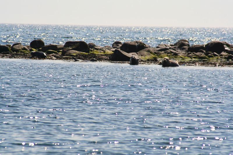 Læsø Summer 2005