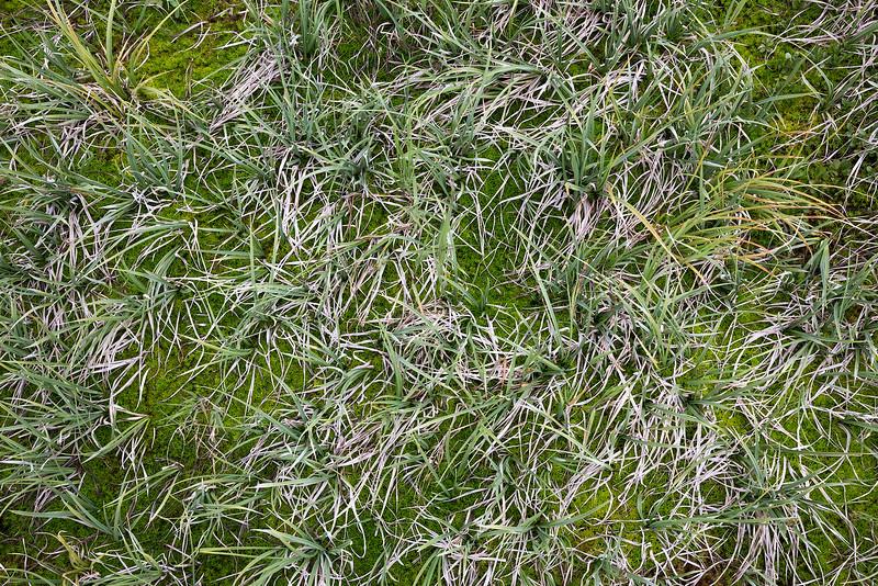 Grass and Moss