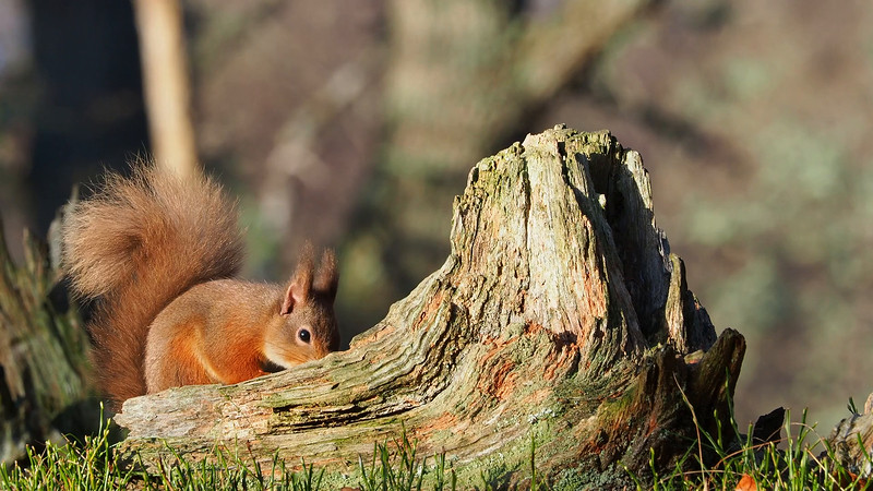 RedSquirrelBootCamp_130217_323.MOV