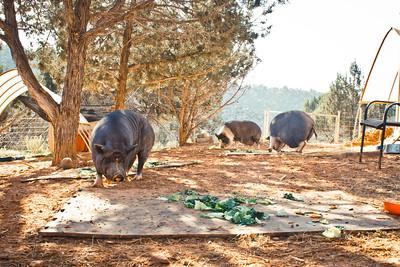 Piggy Paradise