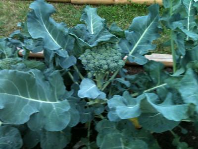 Mrs. Kobeski's Class Plants in Garden