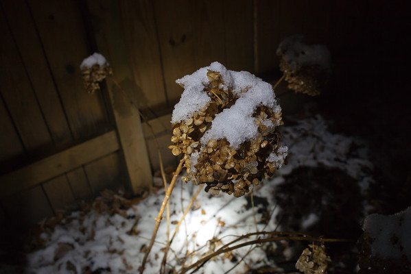 January 9, 2012 - Snowmageddon 2012