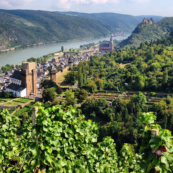 A long look down the Rhine River on a day of blazing sunshine. Giving life to happy grapes overlooking the town of Oberwesel. Taken from the lookout en route to the Loreley overlook at Urbar. #Germany via Instagram http://ift.tt/Wu1uon