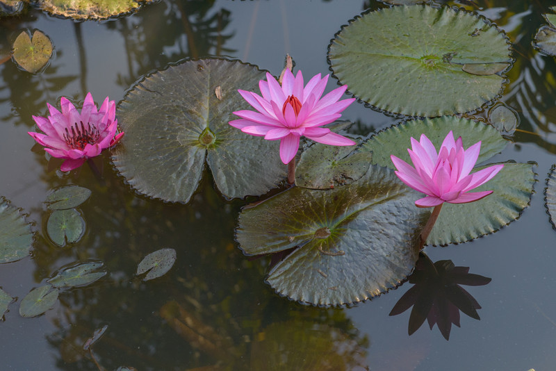 Lotus blossoms were seen in many places.