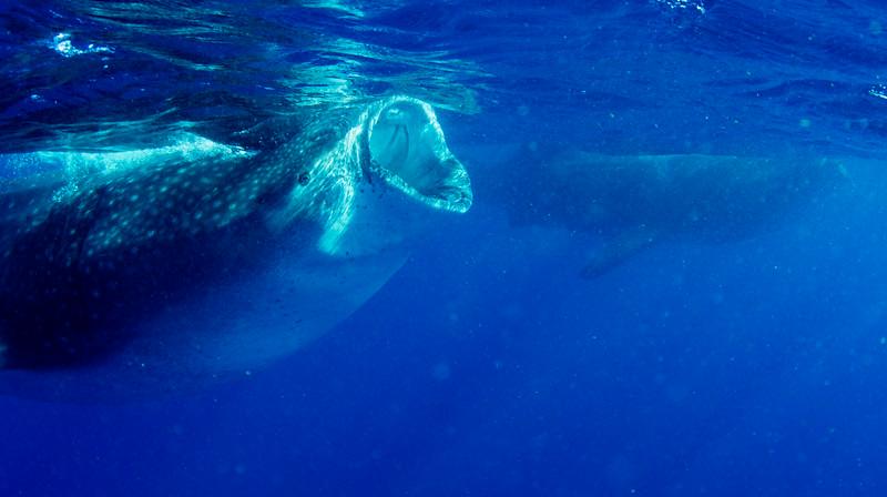 2014 Whale Shark - Cave Adventure-71.jpg