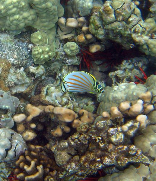 456- 20080416- Hawaii 20-Snorkelling IMG_0635.jpg