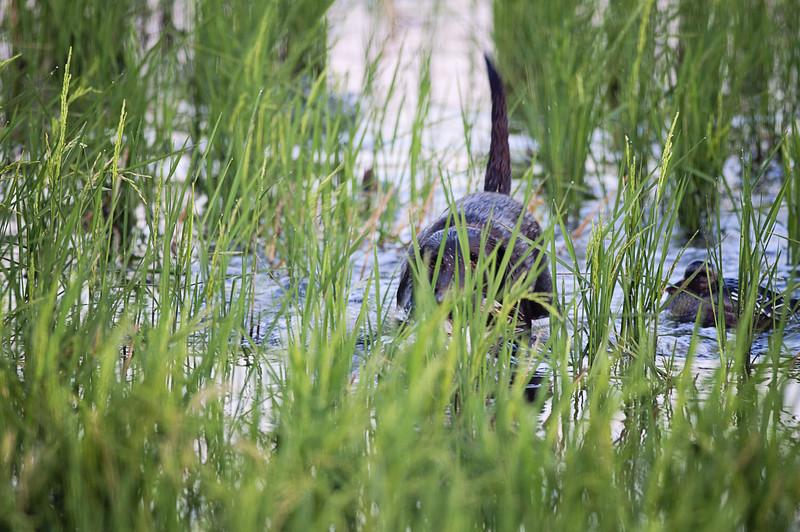 teal hunt (35 of 115).jpg