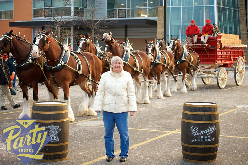 Clydesdale Portraits 125.jpg
