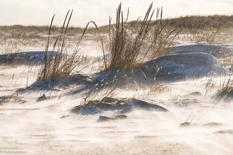 Drifting Snow on the Sand