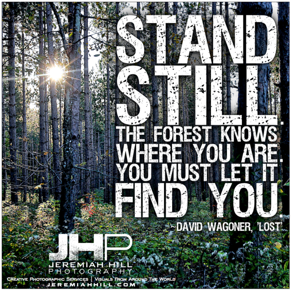 32-Stand Still the forest knows where you are - photoquote.png