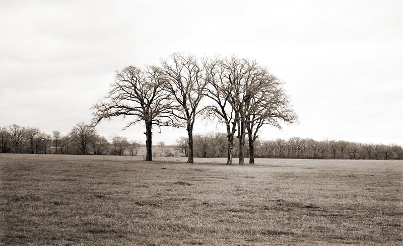 02-2004  670b five trees.jpg
