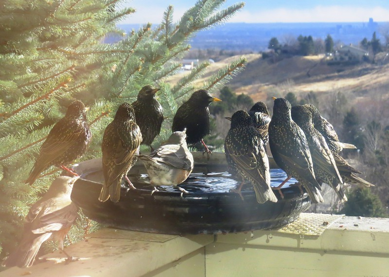 birds (184).jpg