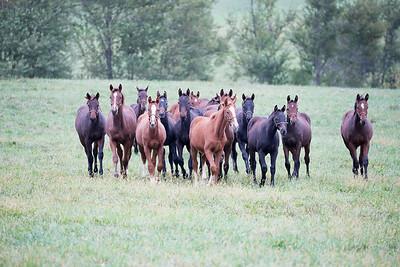 2015-10-04 Horses
