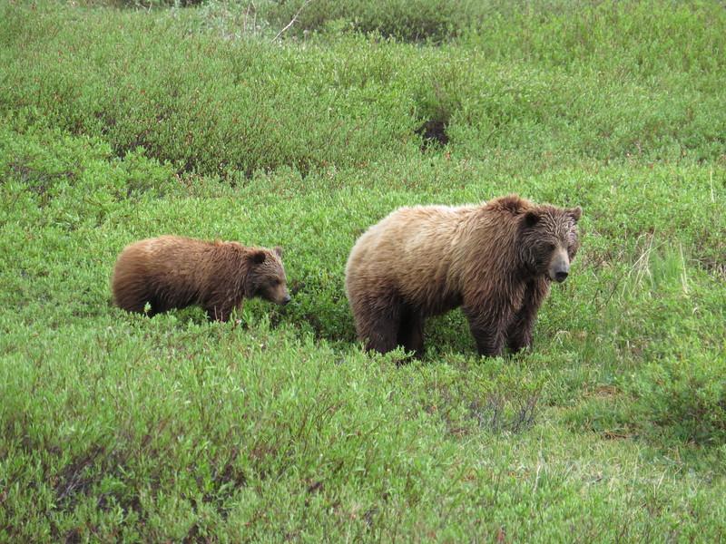 Princeton Journeys Alaska 2019 (11).JPG