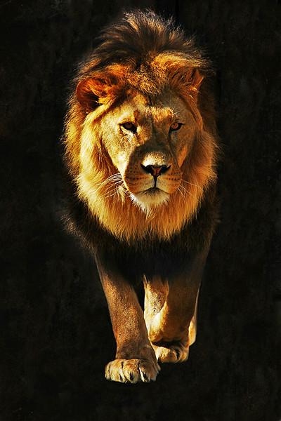 Lion-3.jpg
