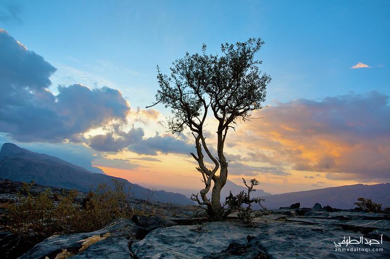 Oman (172).jpg