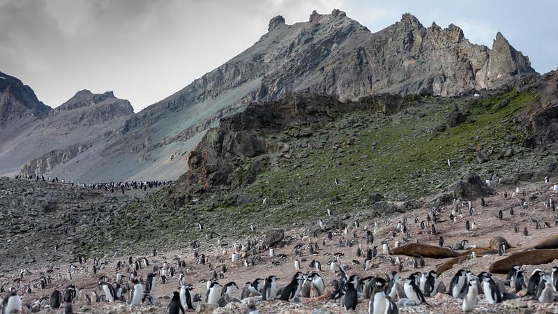 2019_01_Antarktis_02032.jpg