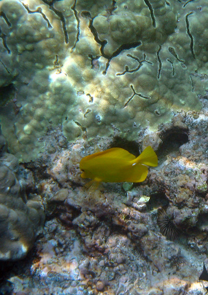 433- 20080416- Hawaii 20-Snorkelling IMG_0599.jpg