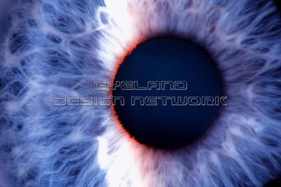 Iris frontal view