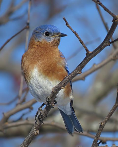 sx50_bluebird_bit_128.jpg