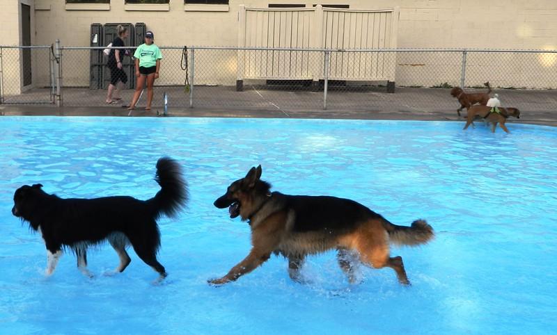 DogDays-NTC-082518 016.jpg