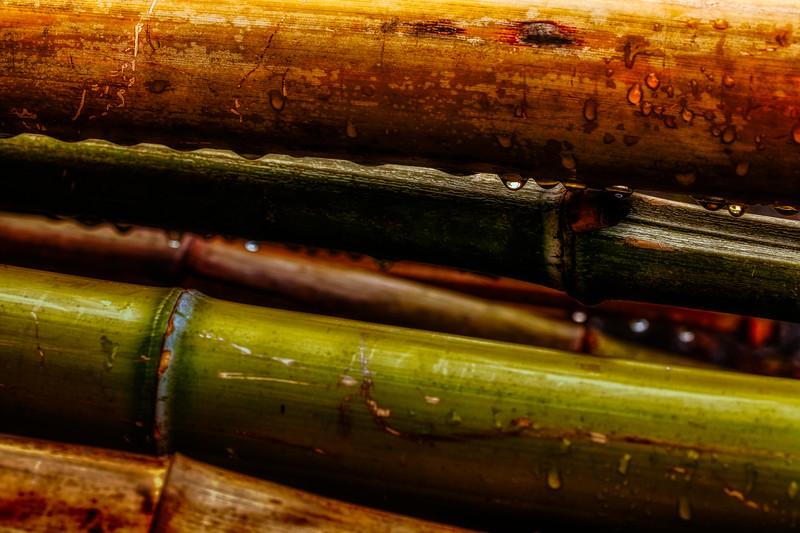 Bamboo 6, Hakone Garden, Saratoga, California, 2010