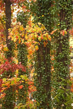 Backyard Color