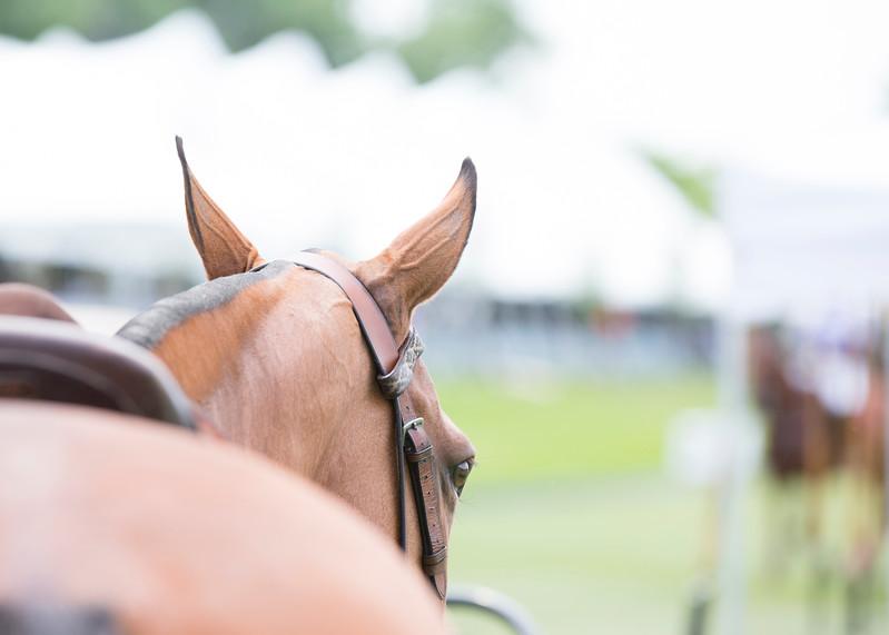 IMG_7437_Polo_Horses.JPG