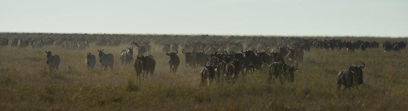 East Africa Safari 311.jpg
