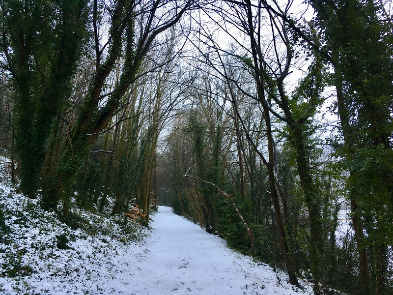 Withdean Woods in a dusting of snow