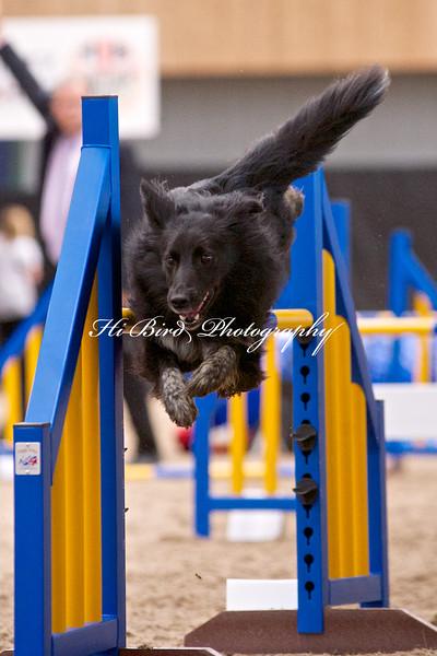 Large dog jumping  1116.jpg