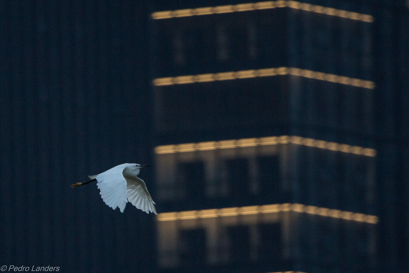 Egret and Architecture
