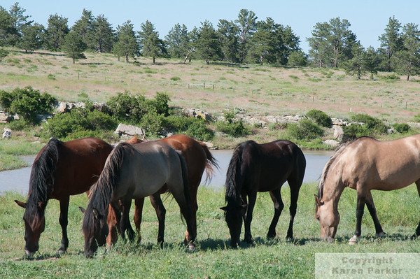In Memory of Tico - from the Black Hills Wild Horse Sanctuary