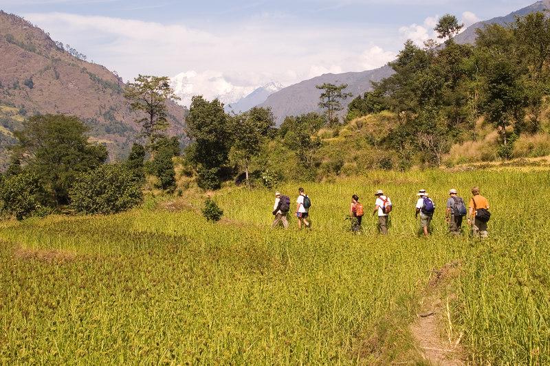Trekking through rice fields.