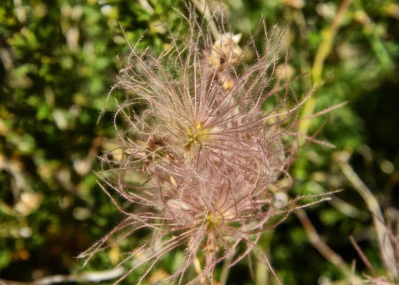 NEA_1137-7x5-Flower.jpg