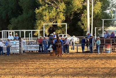 Fri Perf Tie Down Roping