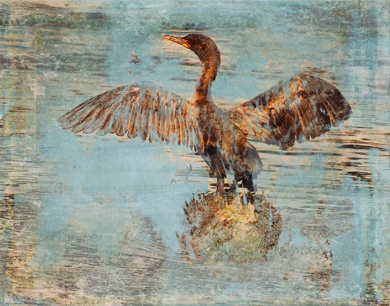 cormorant12.jpg