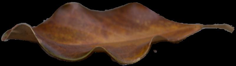 Leaf 34.png