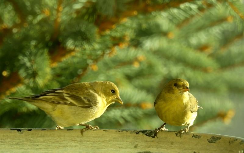 birds (135).JPG