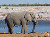 Bull Elephant at a Waterhole